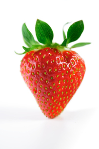 Studio shot of strawberry on white backgroundの写真素材 [FYI03653862]