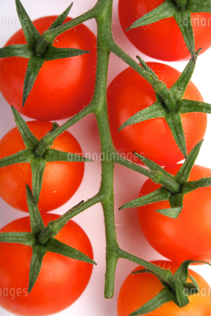 Tomato on white background - studio shotの写真素材 [FYI03653869]