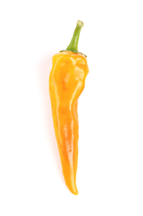 Close-up of chilli pepper on white backgroundの写真素材 [FYI03653873]