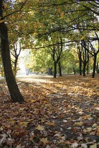 Autumn colors in the parkの写真素材 [FYI03654026]