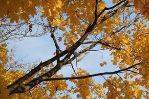 Autumn colors in the parkの写真素材 [FYI03654034]