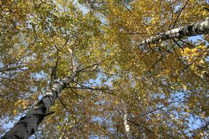 Autumn colors in the parkの写真素材 [FYI03654036]