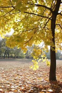 Autumn colors in the parkの写真素材 [FYI03654038]
