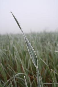 View of frozen grass on meadowの写真素材 [FYI03654039]