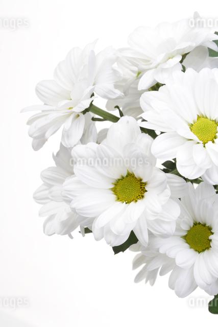 white flowersの写真素材 [FYI03654057]