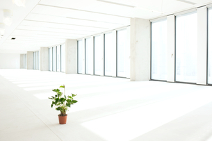 Potted plant in empty officeの写真素材 [FYI03657133]