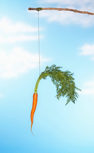 Dangling Carrot From Stickの写真素材 [FYI03657875]