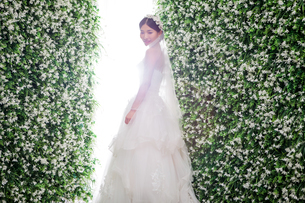 Side view of shy bride standing amidst flower decorationsの写真素材 [FYI03658212]