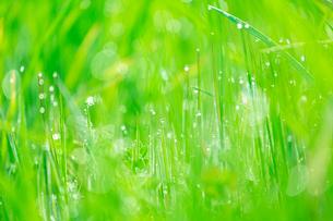 朝露の輝く野草の写真素材 [FYI03661274]