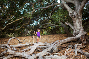 Girl (6-7) standing with stick by large tree rootの写真素材 [FYI03661951]