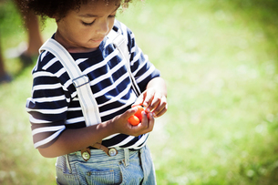 Girl (2-3) looking at cherry tomatoesの写真素材 [FYI03664377]