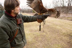 Man holding falconの写真素材 [FYI03666729]