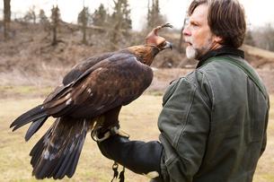 Man holding falconの写真素材 [FYI03666731]