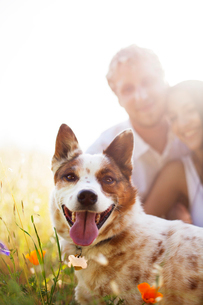 Couple laying in tall grass with dogの写真素材 [FYI03667742]