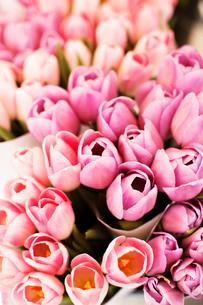 Tulip flowers on market stallの写真素材 [FYI03667924]