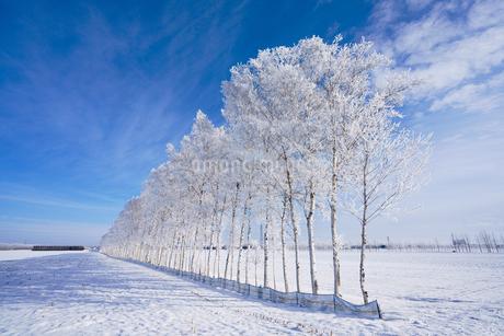 霧氷と青空の写真素材 [FYI03673930]