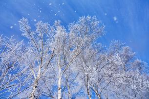 霧氷と青空の写真素材 [FYI03673967]