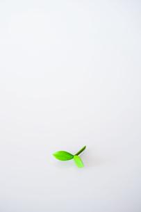 緑の芽の写真素材 [FYI03674087]
