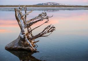 Dry tree root in lake mountain on horizonの写真素材 [FYI03674633]