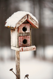 Bird House Covered in Snowの写真素材 [FYI03679352]