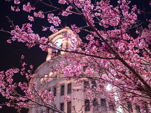 銀座和光と桜の写真素材 [FYI03680842]