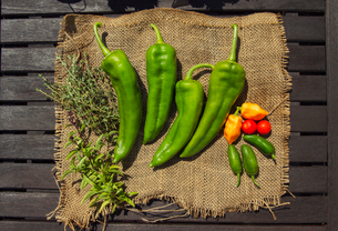 Green chili peppersの写真素材 [FYI03681530]