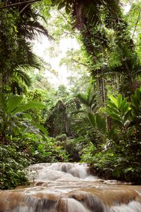 Jamaica, Ocho Rios, River flowing through forestの写真素材 [FYI03683562]