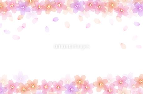 桜 背景フレームのイラスト素材 [FYI03684800]