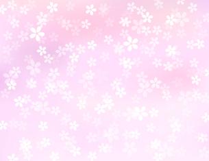 桜 背景素材のイラスト素材 [FYI03686114]
