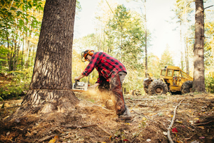 Lumberjack cutting tree trunk with chainsaw in forestの写真素材 [FYI03688712]