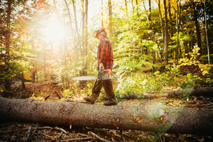 Side view of lumberjack walking on log in forestの写真素材 [FYI03688715]