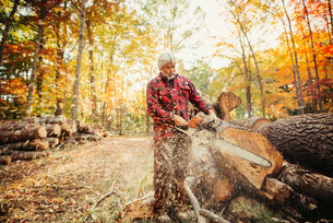Lumberjack cutting log with chainsaw in forestの写真素材 [FYI03688719]