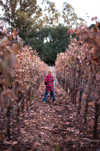 Brothers playing on field amidst dry plants in vineyardの写真素材 [FYI03689545]