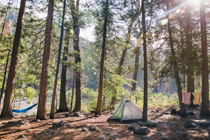Tent in forest on sunny dayの写真素材 [FYI03693543]