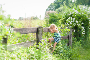 Curious girl climbing wooden fence on sunny dayの写真素材 [FYI03694701]