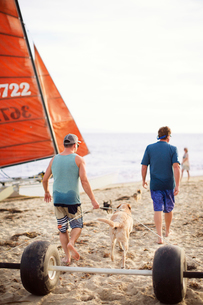 Rear view of man pulling wheels while walking with father and Labrador Retriever at beachの写真素材 [FYI03696326]