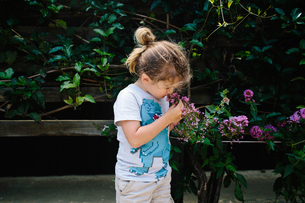 Curious girl smelling flower while standing in backyardの写真素材 [FYI03698832]