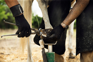 Midsection of farrier putting shoe to horse while standing on fieldの写真素材 [FYI03701518]