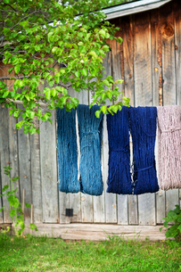 Various strings of wool drying on clothesline against workshopの写真素材 [FYI03702743]