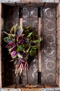 Overhead view of leaf vegetables in wooden crateの写真素材 [FYI03703144]
