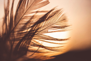 Close-up of feathers against sky during sunsetの写真素材 [FYI03703847]