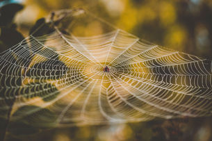 High angle view of spider on webの写真素材 [FYI03707572]
