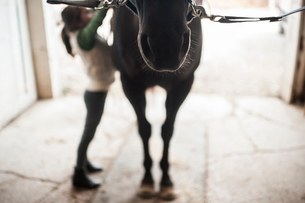Full length of girl standing by horse in stableの写真素材 [FYI03707751]
