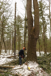 Full length of man sawing tree in forestの写真素材 [FYI03707893]