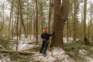 Full length of lumberjack looking up while standing by tree in forestの写真素材 [FYI03707895]