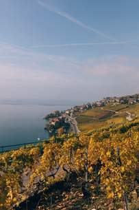 High angle view of terraced vineyard by Lake Geneva against skyの写真素材 [FYI03707914]