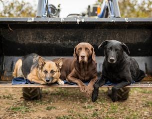 Portrait of dogs sitting on bulldozer bladeの写真素材 [FYI03707949]