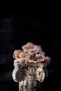 White mushroom on old pedestal against black backgroundの写真素材 [FYI03708097]