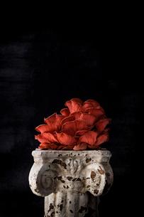 Mushroom on old pedestal against black backgroundの写真素材 [FYI03708098]