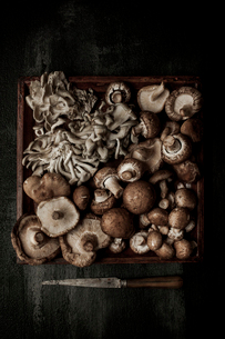 Overhead view of mushroom in tray with knife on tableの写真素材 [FYI03708101]